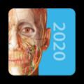 2020人體解剖學圖譜 2020.0.71