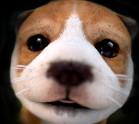 狗狗模拟器破解版