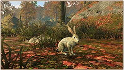 明日之后抓兔子怎么玩?