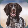 狂犬模拟器游戏